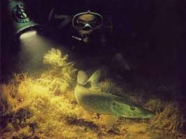 Unterwasserfotografie - A. Grambow, R. Krause
